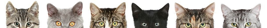 Book Now with Clay Cottage Cattery